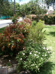 Native hedge and garden